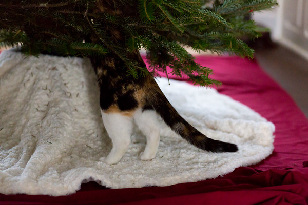 Calico cat and a Christmas Tree
