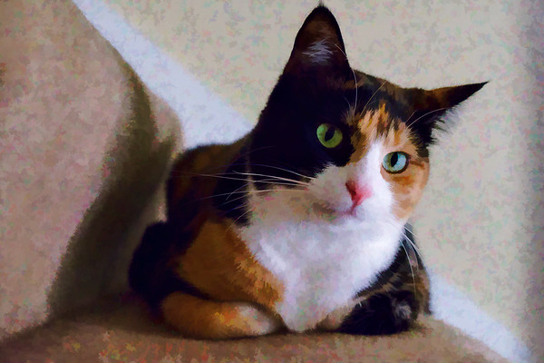 Calico cat with topaz labs plugin