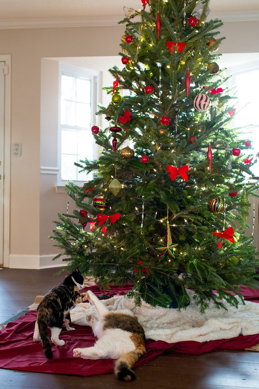 Calico cats playing under a Christmas Tree