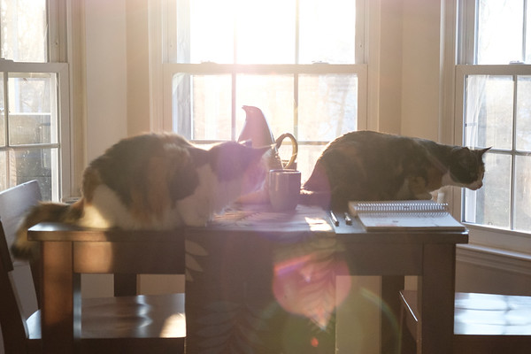 2 cats on a table with morning sun!