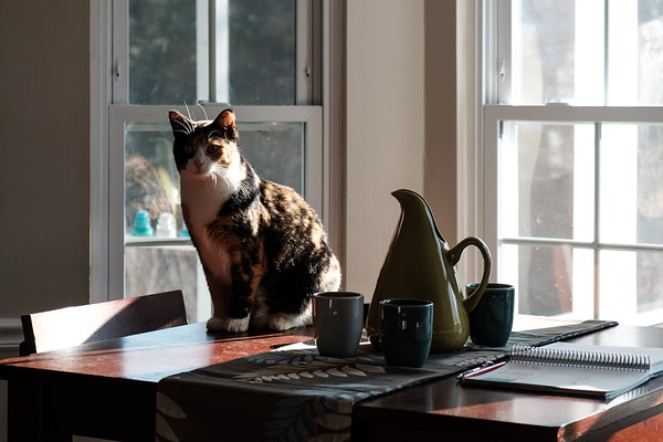 Calico cat on table with pottery and journal