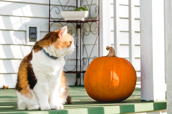 Calico cat and pumpkin edited with Topaz Labs
