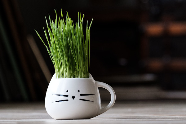 Cat mug filled with cat grass