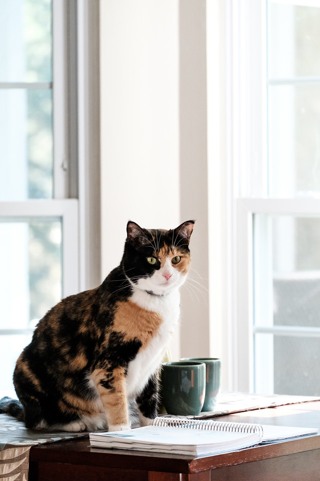 Calico cat sitting on table with journal open and windows behind.