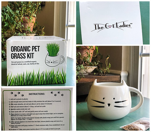 Collage of organic cat grass kit
