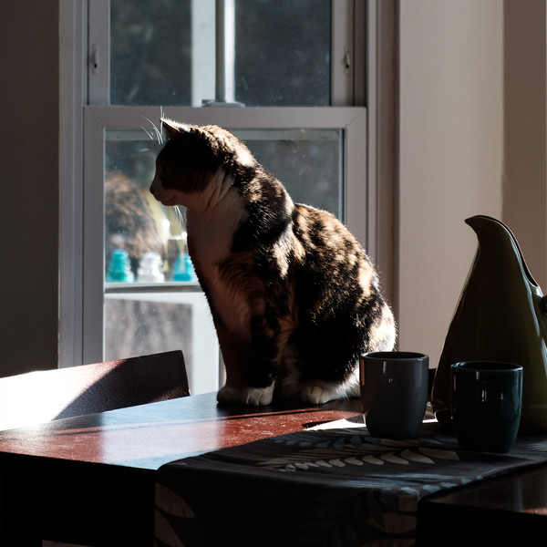 Calico cat on table with harsh light and shadows
