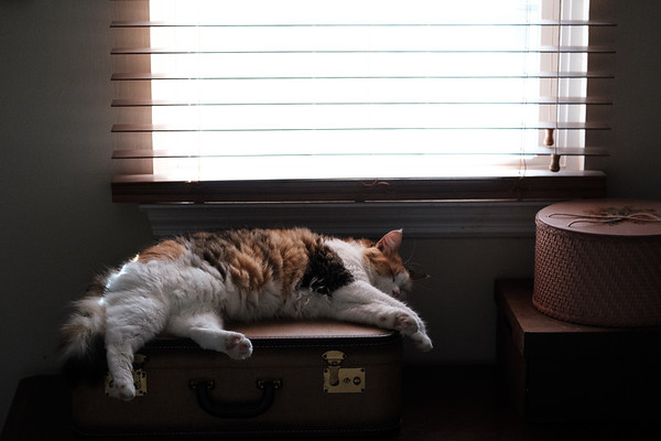 Calico cat sleeping.