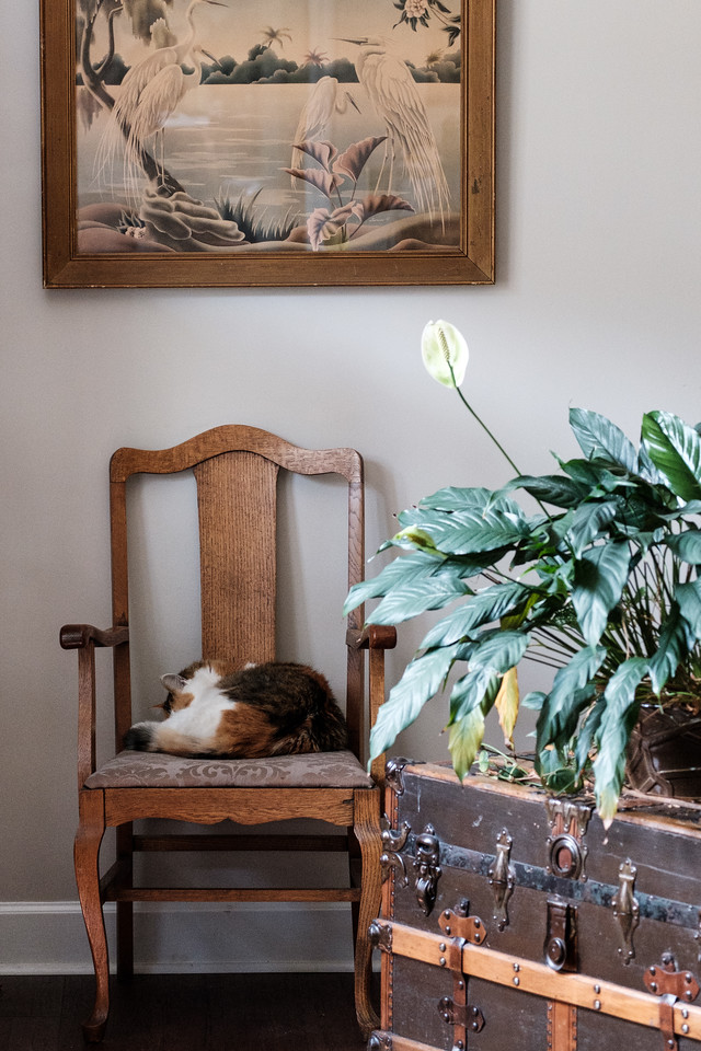 Calico cat sleeping on a chair with a vintage trunk, plant and picture