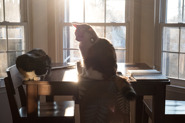 2 cats on the table with sun behind them