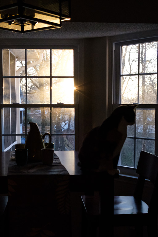 Silhouette of cat looking out window at sunrise