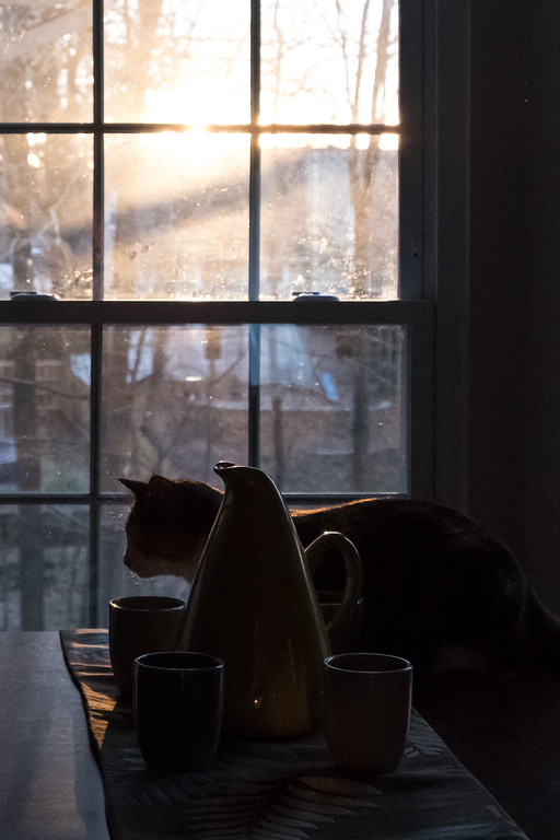 cat looking out window with sunrise