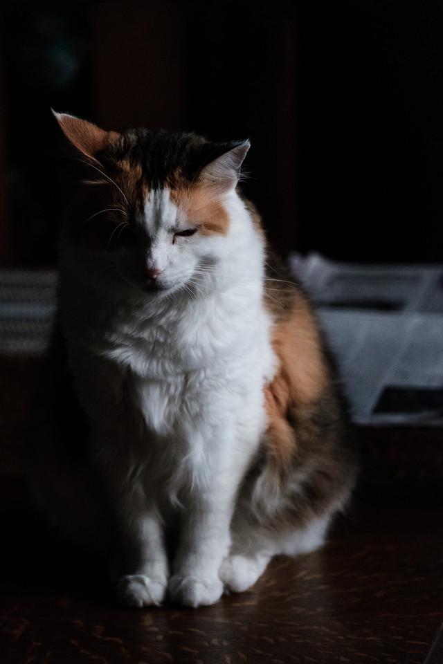 Calico cat halfway illuminated