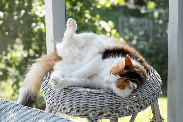 Calico cat sleeping on wicker stool
