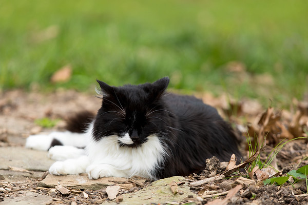 Black and white cat with it's eyes closed