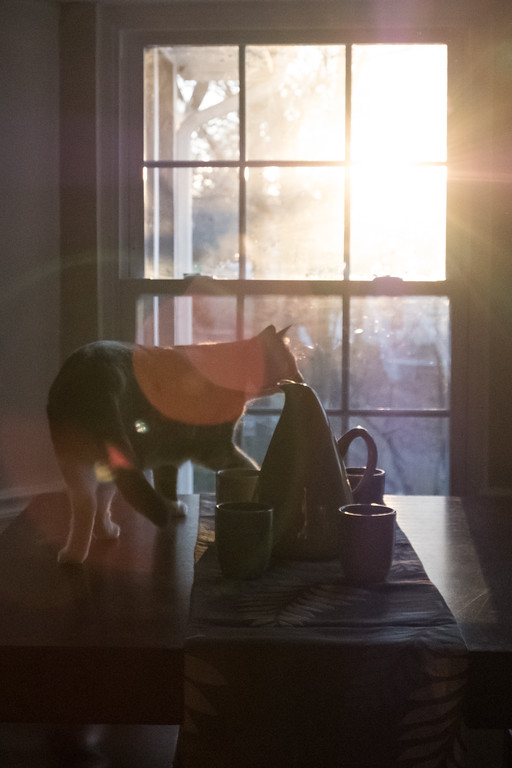 Silhouette of cat in front of a window with the sun rising.