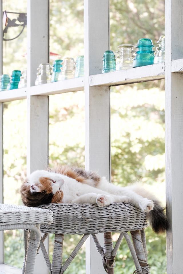 Calico cat sleeping on wicker stool