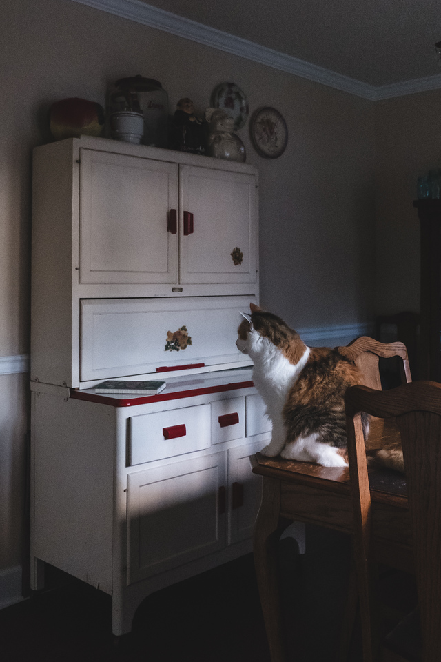 Calico cat in evening light on a dining room table.