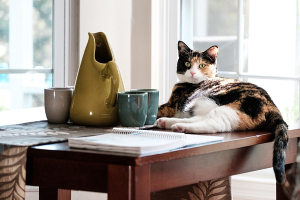 Calico cat on table with pottery and a notebook.