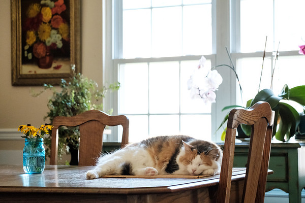 Calico cat laying on placemats