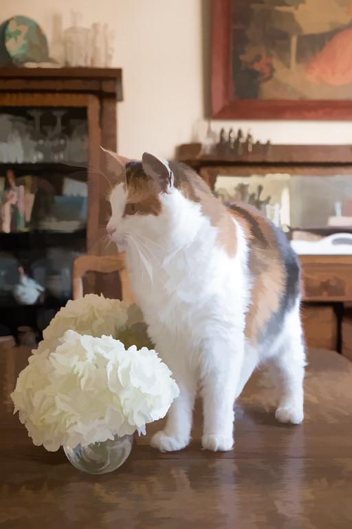 Calico cat with hydrangeas