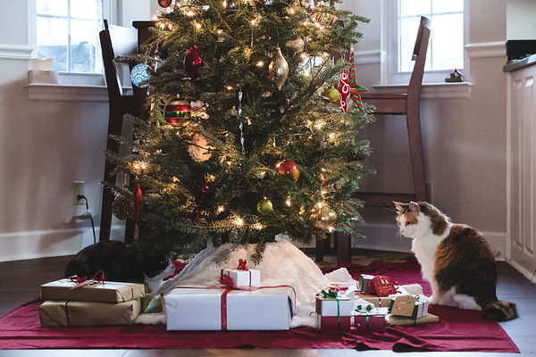 Calico cats under a Christmas tree