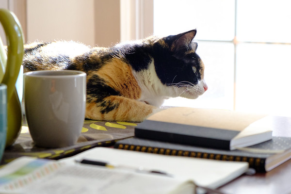 Calico cat with journals