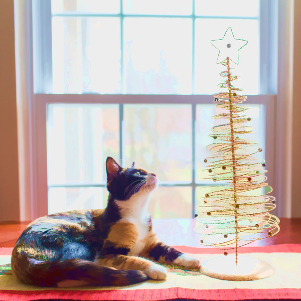 Calico kitten and Christmas tree edited with Topaz Labs