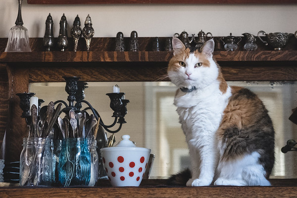 Calico cat sitting on sideboard