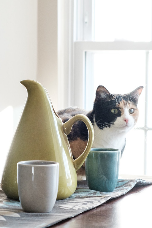 Calico cat with Bauer Pottery