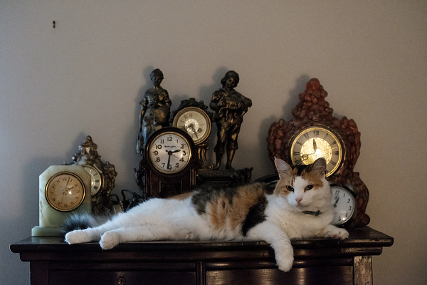Cat on a table with a bunch of clocks