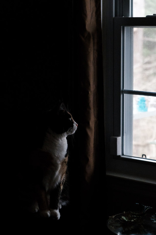 Calico cat looking out window. Very little light on the cat.
