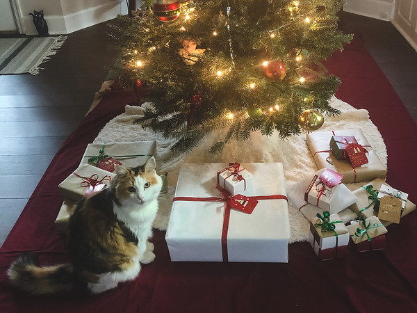 Calico Cat with presents under the Christmas tree