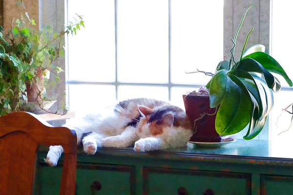 Calico cat edited with Topaz labs plugin