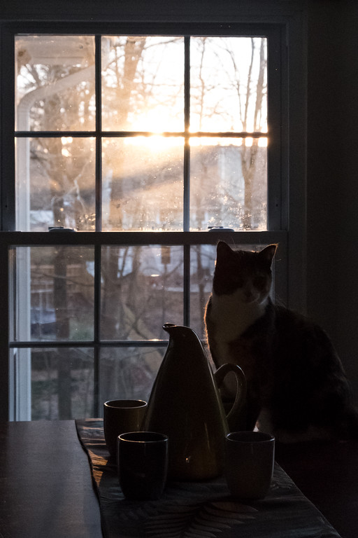 Cat on table with sunrise behind her