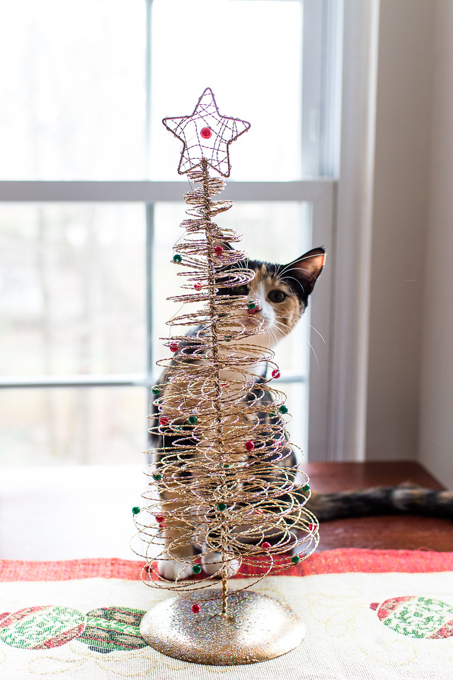 Calico cat behind a little Christmas tree