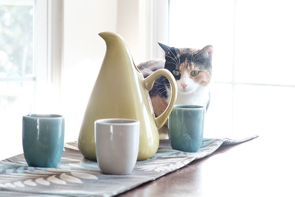 Calico cat on table with Bauer Pottery