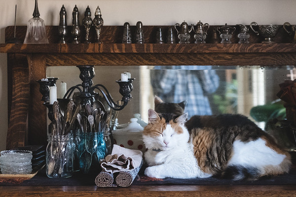 Calico sleeping on antique sideboard