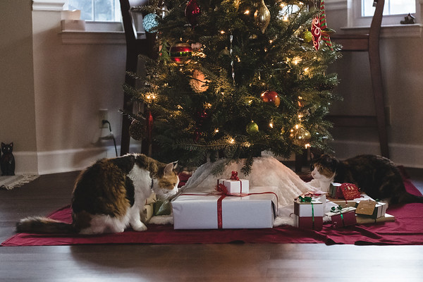 Two calico cats under a Christmas Tree