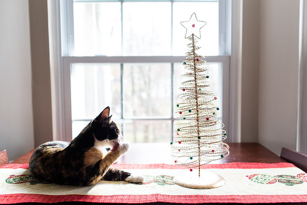 Calico cat and her christmas tree