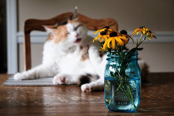 Cat grooming on a placemat with flowers