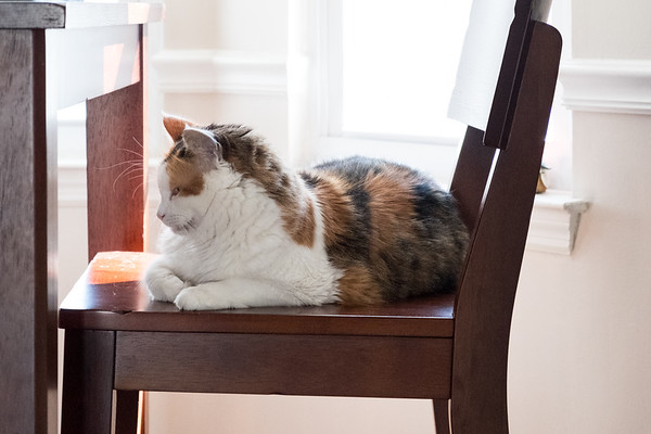 Cat sleeping on a chair