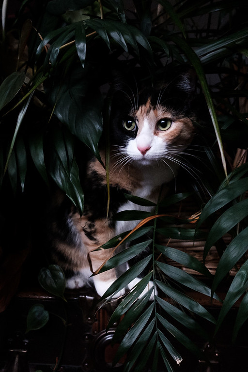 Calico cat looking out through houseplants.