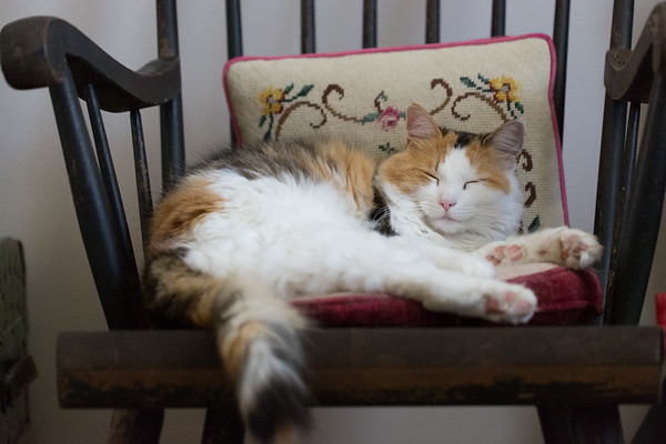 Calico cat on a rocking chair