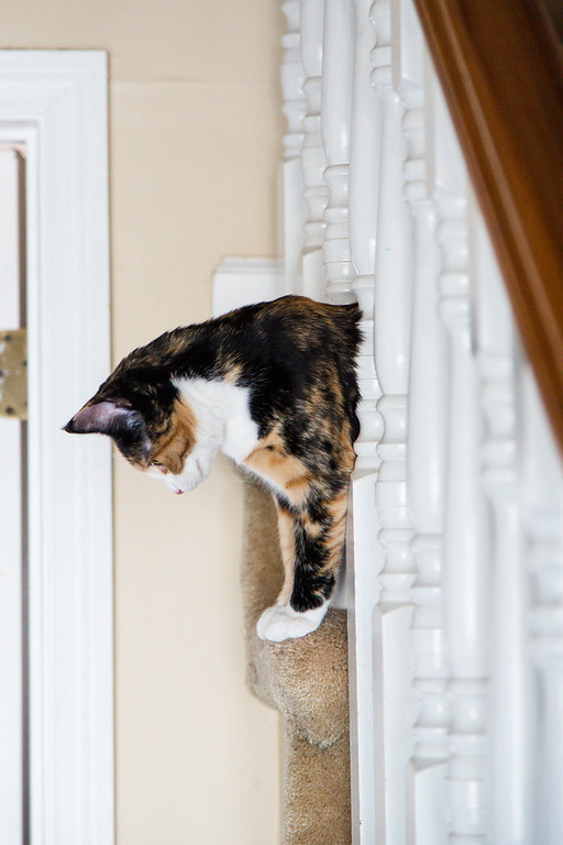 Calico cat in the stairs.