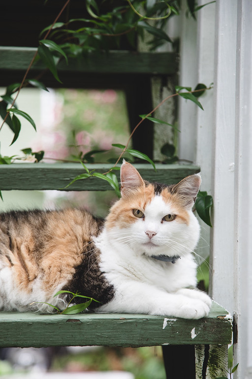 Calico cat sitting on some outside stairs.