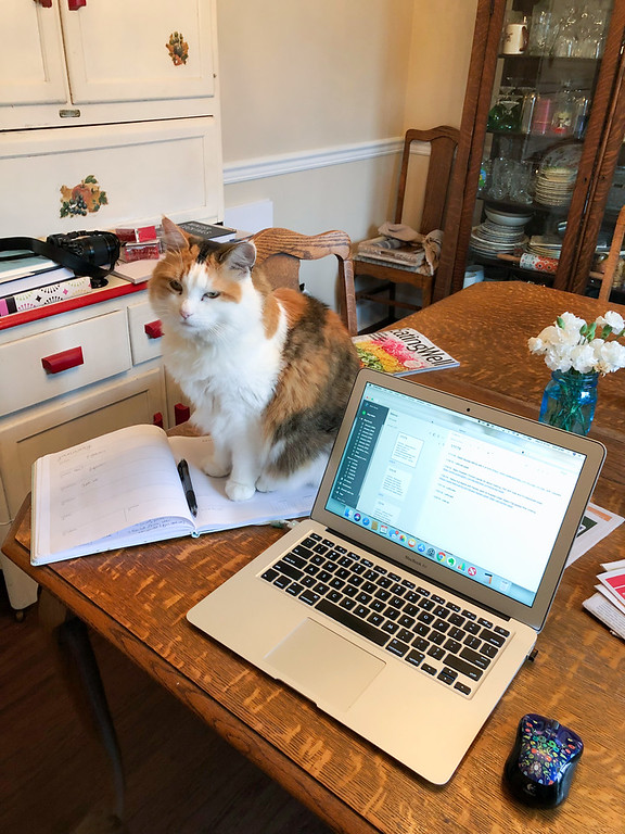 Calico cat sitting on notebook