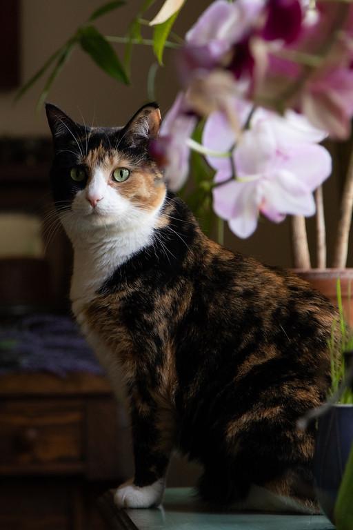 Calico cat in dark moody light.