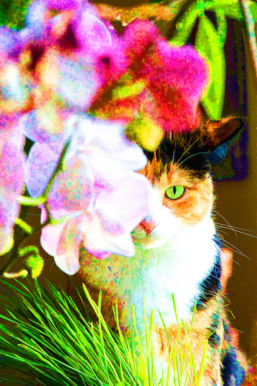 Calico cat and orchids edited with Topaz Labs.