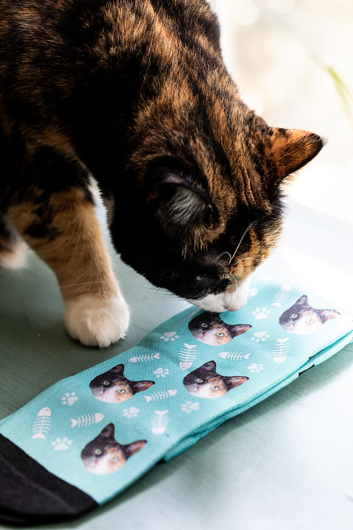 calico cat and socks with her photo on them.