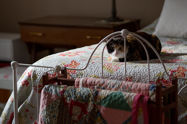 Calico cat on the bed in the evening light.